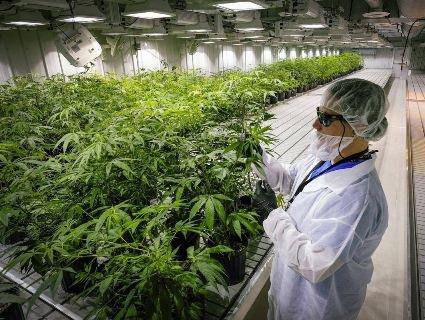 Уклали рекордну угоду на ринку легальних наркотиків