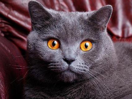 У Італії кіт отримав у спадок 30 000 євро