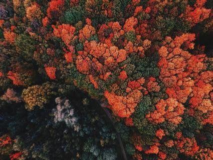 Карпатський фотограф показав запаморочливі гори, зняті дроном