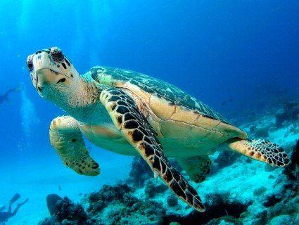 23 травня відзначають Всесвітній день черепахи