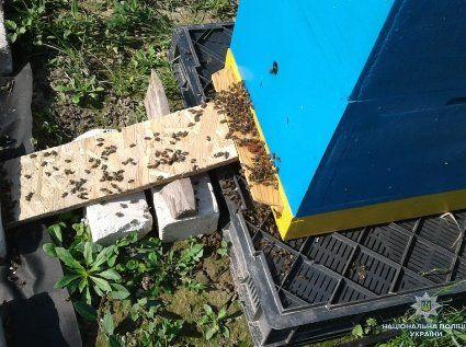 На Волині масово гинуть бджоли: уже втрачено близько 400 сімей (фото)