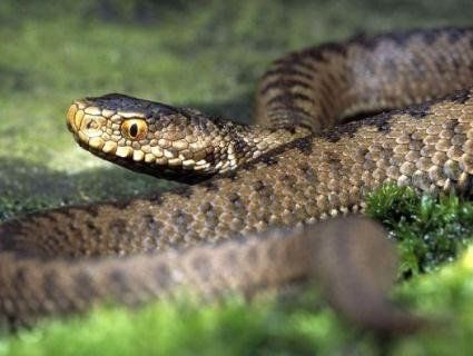 Обережно, змії: постраждало двоє дітей