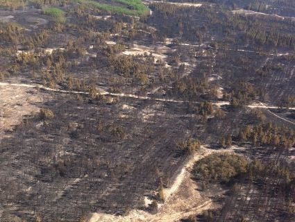 На Херсонщині масштабна пожежа, яку гасять пожежники шести областей