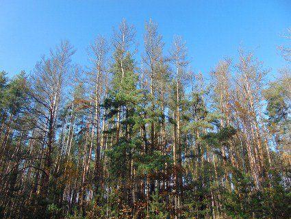 На Івано-Франківщині у лісі на іномарці застряг поляк