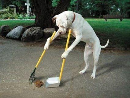 За неприбрані собачі екскременти штрафуватимуть на 1 700 гривень