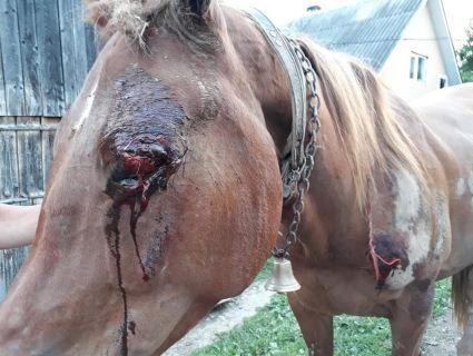 На Закарпатті депутат сільради прив'язав коня сусідів до машини і тягнув по асфальту, бо той забрів у його город