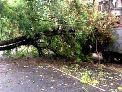 У Києві під час грози дерево вбило жінку
