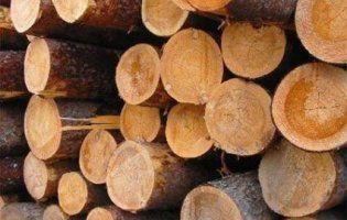Через Ягодин незаконно вивозили дуб на 300 тисяч гривень