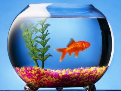 Як вибрати корм для рибок?
