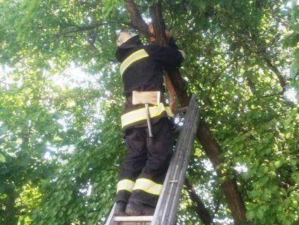 На Кіровоградщині з дерева зняли малого Мауглі