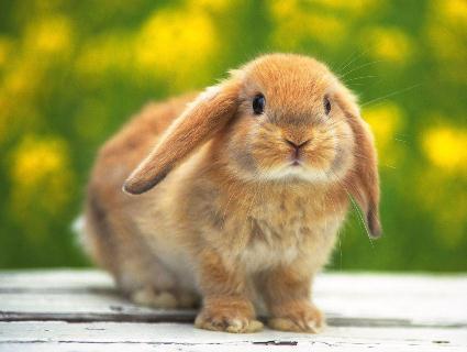Екзотика для кролика
