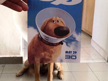 Фотограф «доповнює» постери голлівудських фільмів котами і собаками (фото)
