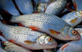 Одеський рибоохоронний патруль вилучив 250 кг риби та 70 знарядь лову за тиждень (фото)