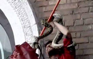 У Києві людей лякав гігантський пітон (фото)