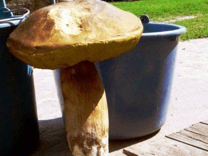 На Маневиччині «вполювали» гриба-мутанта