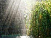В Україні на вихідні - теплий дощ