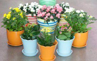 Відомі квіткарі назвали вазони, що приносять багатство