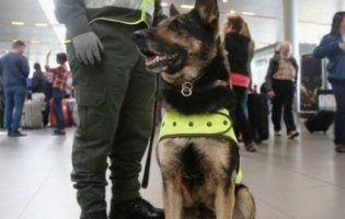Мафіозі готові заплатити за голову поліцейського пса 70 тисяч доларів