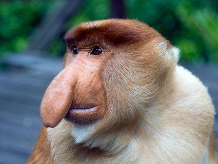 5 найдивніших тварин світу