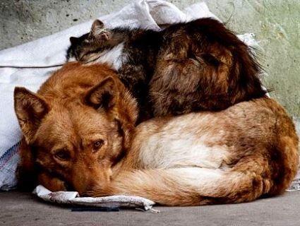 18 серпня – Всесвітній день бездомних тварин