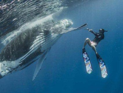 Велетенський кит «дав п'ять» аквалангістці (фото)