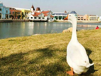 У Китаї студентом став птах