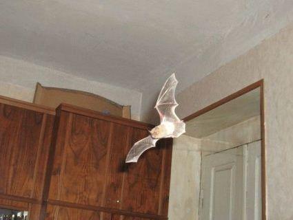 У Харкові пенсіонерку у власній оселі атакувала хмара кажанів