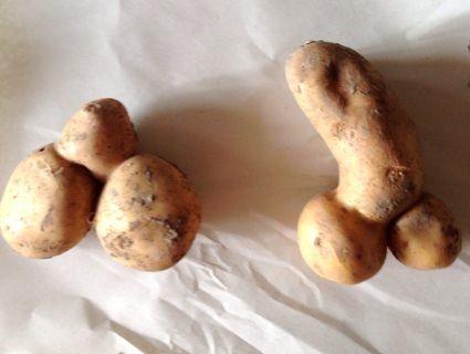 На Волині викопали  картопляного «пеніса» (фото)