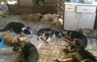 Харківські зоозахисники показали, як виглядає «тиха година» у притулку для собак (фото)