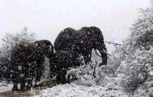 Найспекотніший материк земної кулі, Африку, занесло снігом (відео)