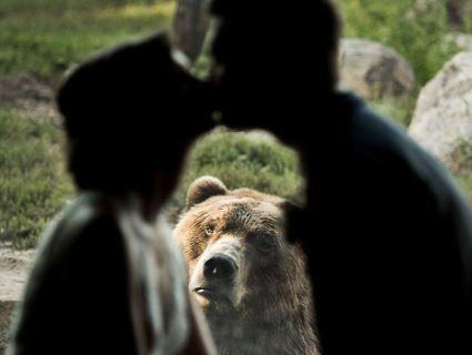 Мережу розсмішив ведмідь, який зафотобомбив весілля