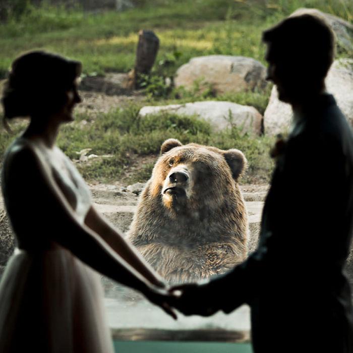 Ведмідь на весіллі