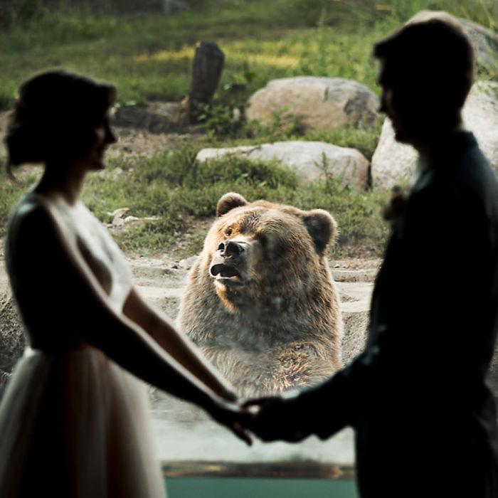 Приколи з ведмедями
