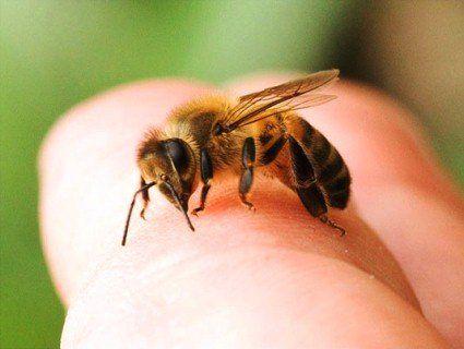На Тернопільщині дитина померла від бджоли, яка ховалася у грушці