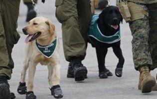 Мімімішно: собаки в «черевичках» на військовому параді в Чилі розчулили Мережу (фото, відео)
