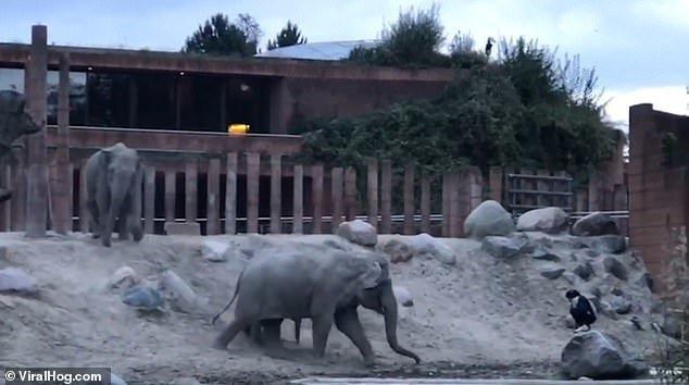 Слони Копенгаген