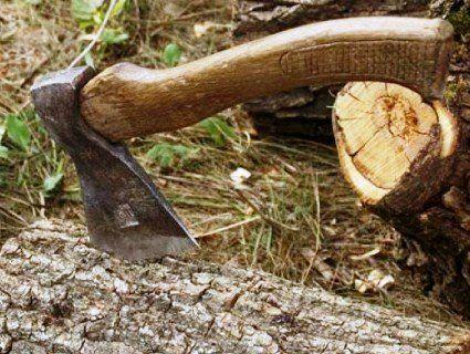 На Волині наглих і п'яних крадіїв лісу затримали на гарячому (фото)