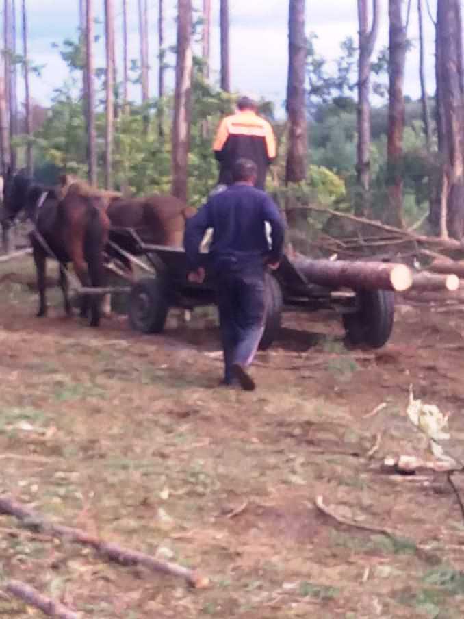Крадіжка лісопродукції у Тельчівському лісництві лісгоспу