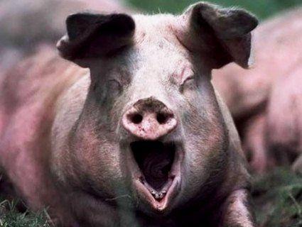 Гігантська свиня вбила свого господаря
