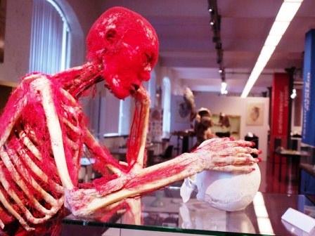 Виставка Body Worlds у Лондоні фото 3