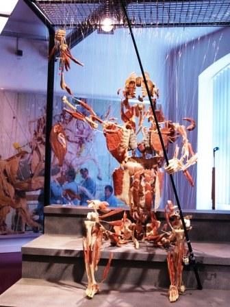 Виставка Body Worlds у Лондоні фото 1