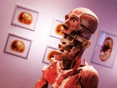 Виставка Body Worlds у Лондоні фото 5