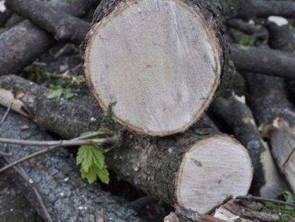 У Луцьку просять дати лад сміттю після вирубки дерев