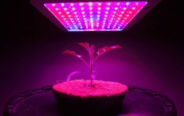 На МКС будуть вирощувати канабіс