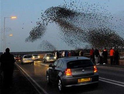 П'яні та буйні: птахи нападають на людей