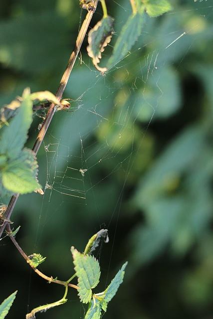 Осінній Луцьк від фотографки Олександри Власюк фото 10