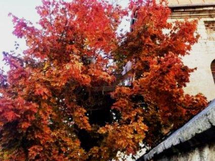 На Тернопільщіні безхатьки «звили гніздо» на дереві (фото)