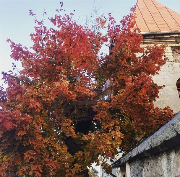На Тернопільщіні безхатьки проживають на дереві
