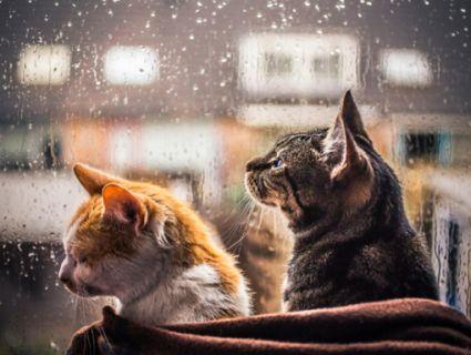 Синоптики радять «годувати котів», бо наближається похолодання