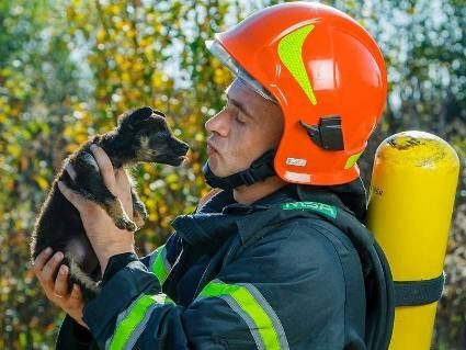 Рятувальники Закарпаття постять милі фото з бездомними тваринами